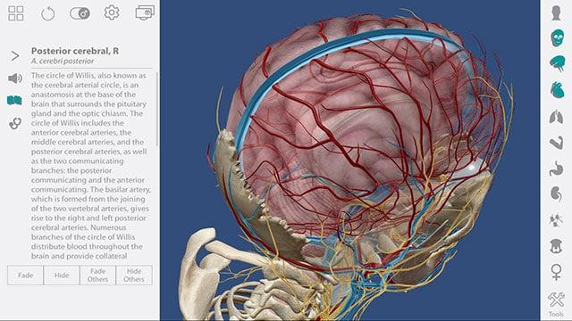 human anatomy atlas е софтуер за zspace за изучаване на човешкото тяло и анатомия