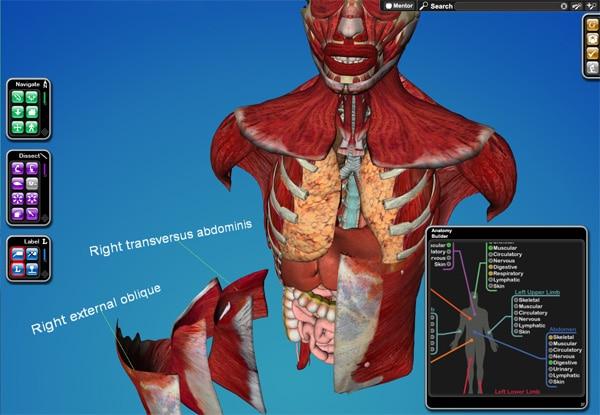 Виртуална дисекция и 3d изучаване на човешкото тяло в обучението по медицина и анатомия - виртуална дисекция на гръден кош
