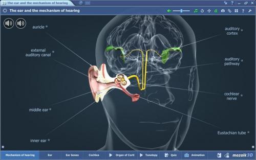 Закупуване на mozaBook Classroom - 3D модел по биология