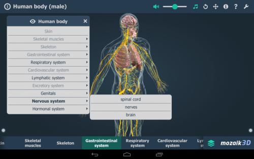3D сцена на човешкото тяло в mozabook classroom. Закупуване на лиценз за софтуера от официален дистрибутор в България